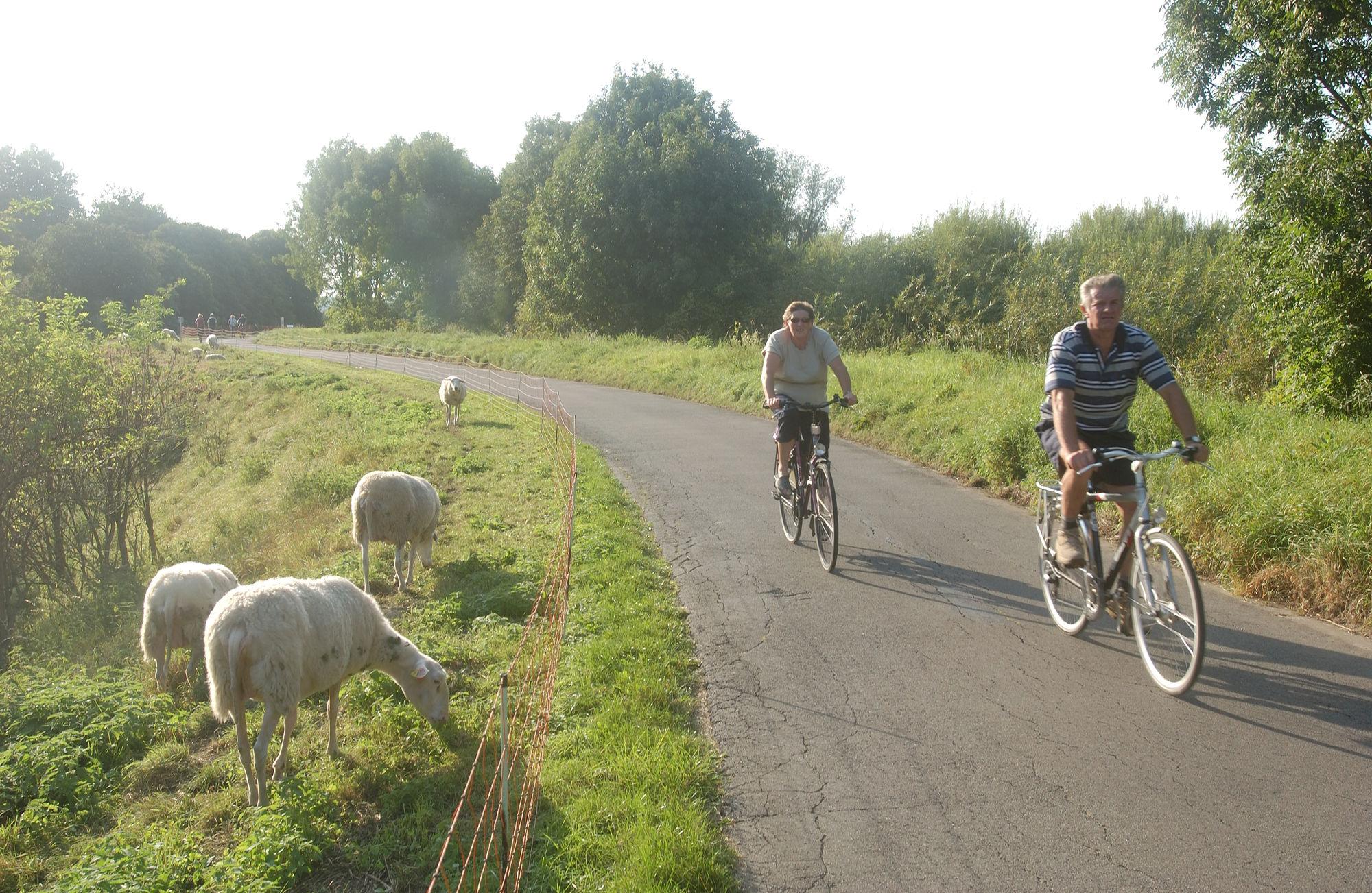Ontdek al fietsend de Antwerpse Kempen