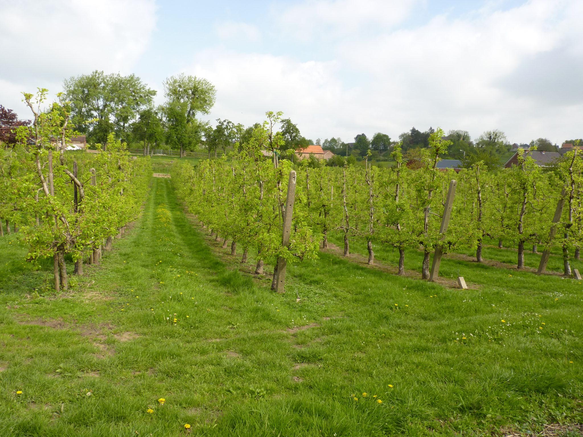 (FR)UITSTAPJES in Limburg.