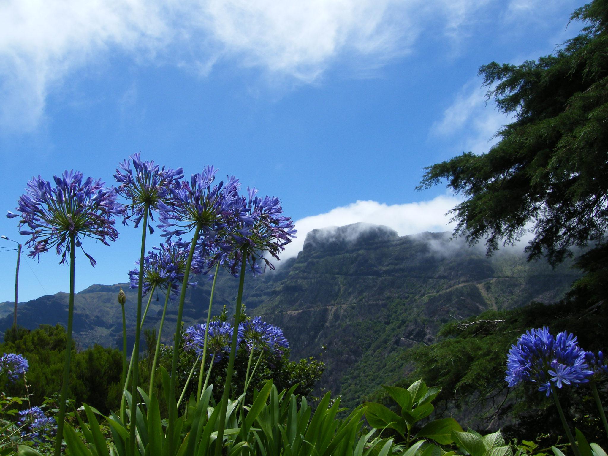 Bloemenpracht in spectaculair landschap
