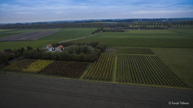 Wijngaard 't Biezenhof, een oase in de polders van Zeeuws Vlaanderen.