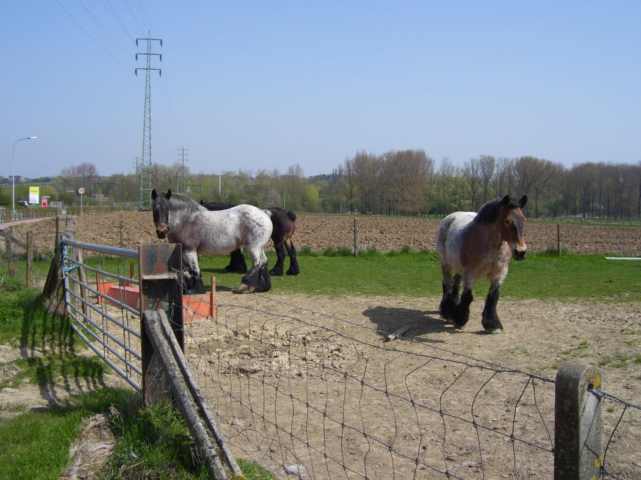 Landelijk Limburg.