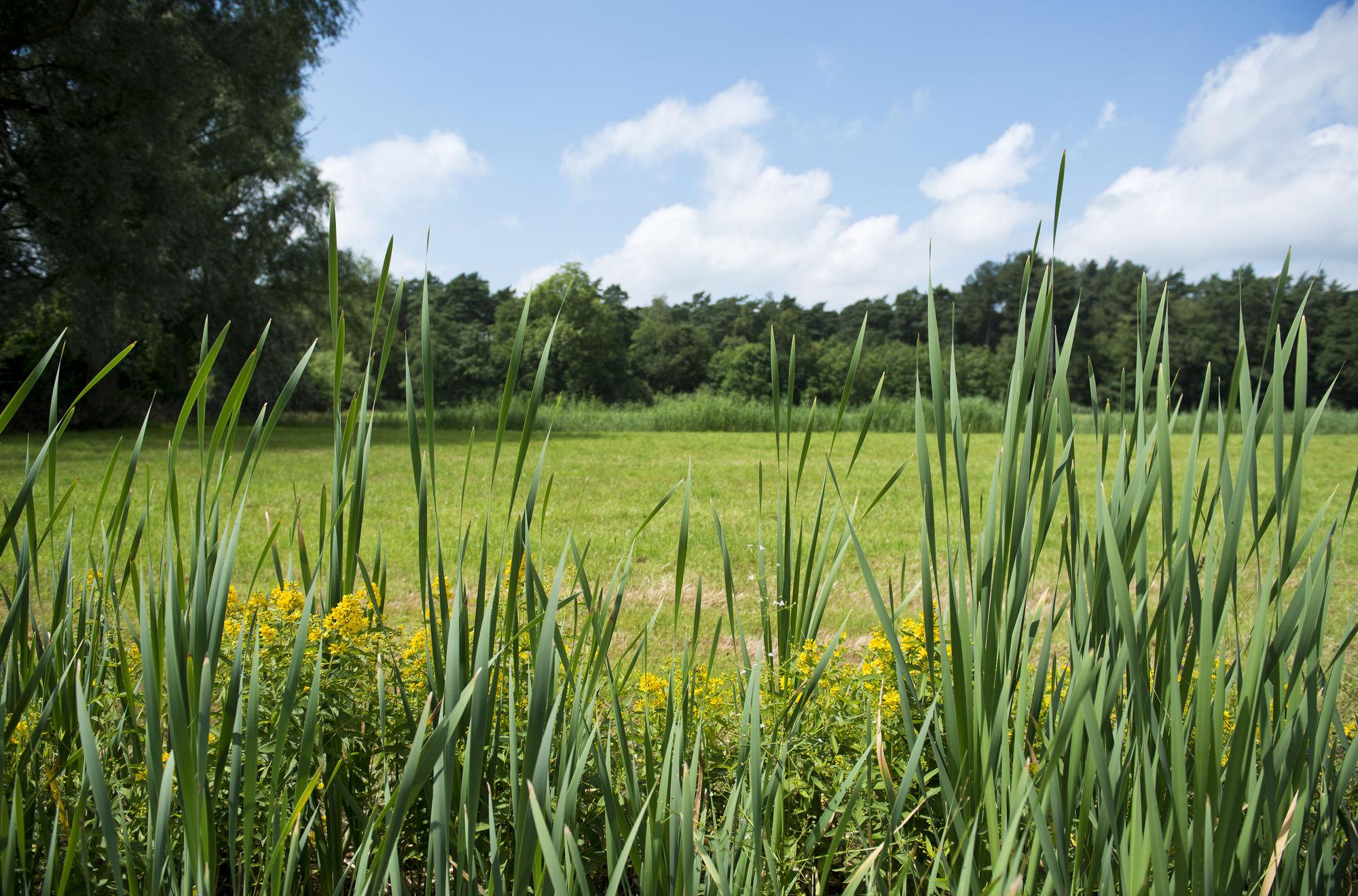 Natuurpad Lovenhoek is wandeling van het jaar. Natuurwandeling in Vorselaar charmeert groot én klein.