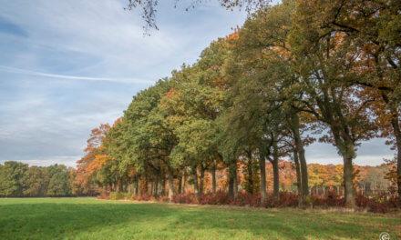 'Van Slag' Molenwandeling in Lille.