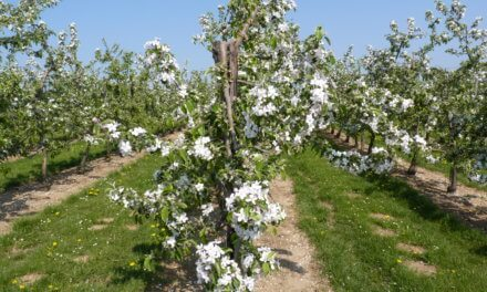 Fruitroute Sint-Gillis-Waas: fietsen en wandelen tussen de fruitbomen.