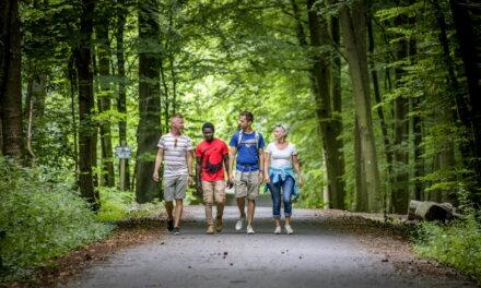 Grootste Vlaamse loofwoud virtueel ontsloten voor wandelaars.