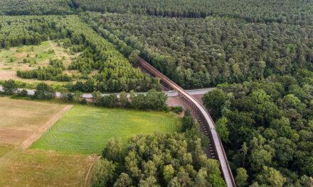 Fietsen door de heide in het Nationaal Park Hoge Kempen.